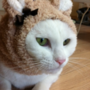 kenji64